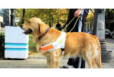I cani sono felici di aiutare l'uomo: lo studio
